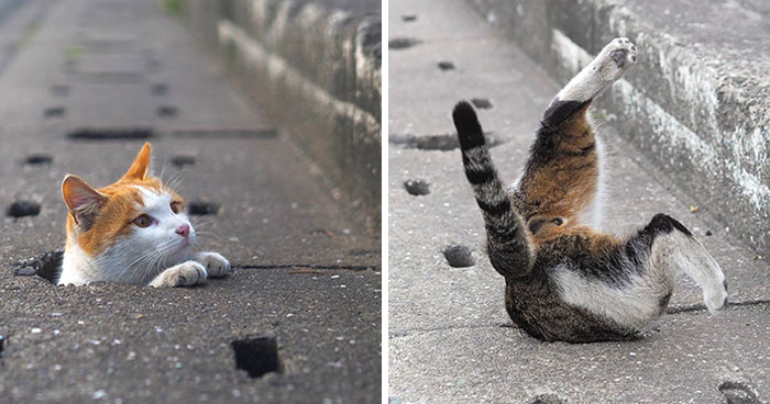 Japanese Photographer Captures Stray Cats Having Fun And Not Giving A Damn In The World