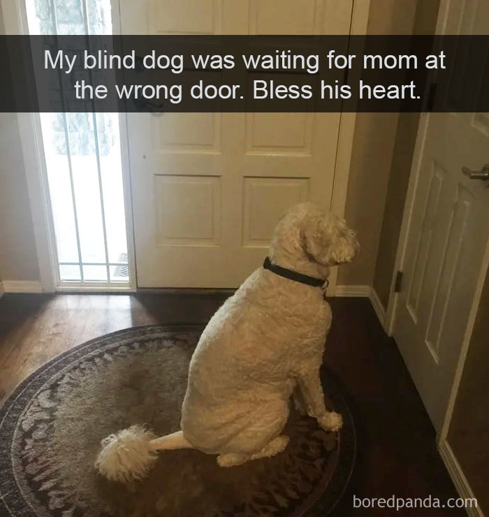Hilarious-Dogs-Snapchats