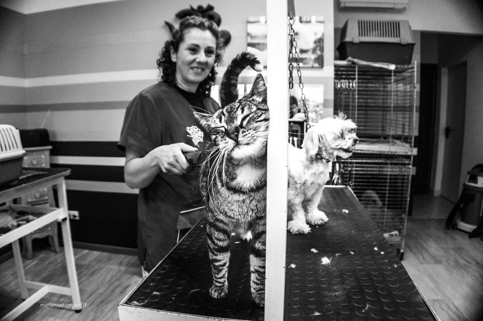C-At Work: A Photographic Project About Cats That Live In Working Places (New Pics)