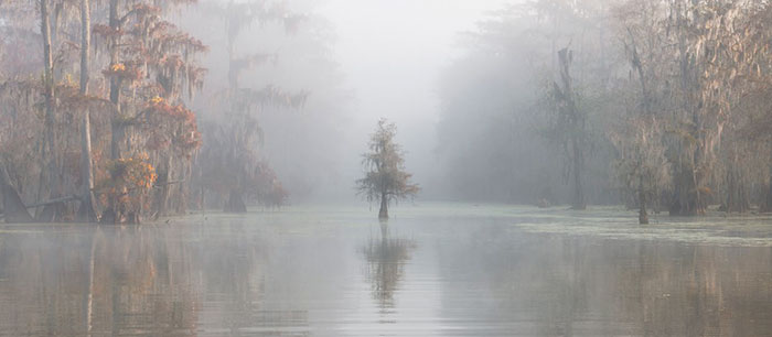 2018 International Landscape Photograph Of The Year 3rd Place, Atchafalaya Basin, Louisiana, Usa, Roberto Marchegiani