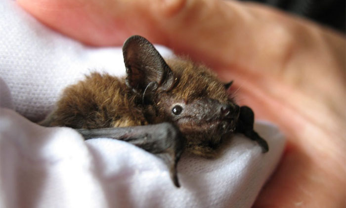 UK Library Museum Posts Hilarious Twitter Thread About A Bat Found In Their Store