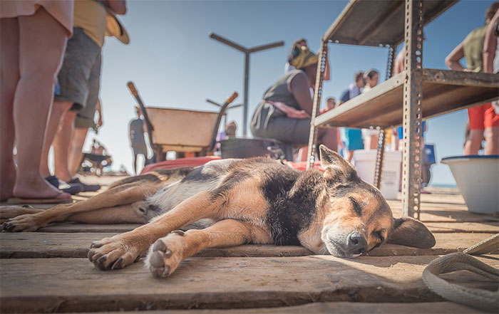I Traveled To Cape Verde And Captured The Everyday Life Of Stray Dogs There