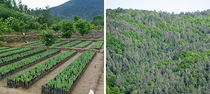 Pakistan Plants 1 Billion Trees And Is Planning To Plant 10 Billion In The Next 5 Years