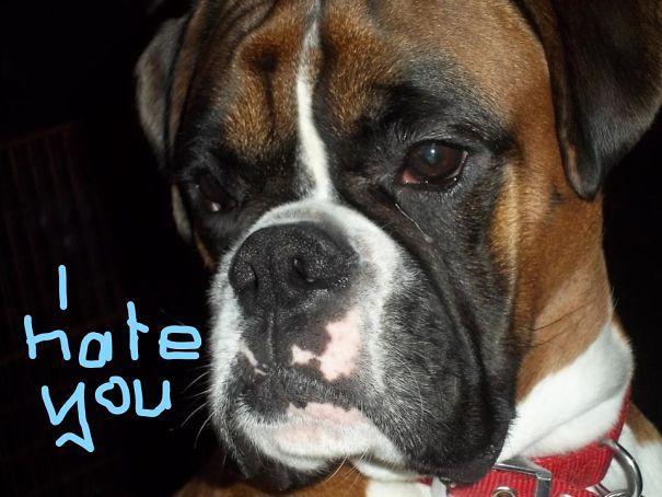 seriously-grumpy_LI-5c648de231b58.jpg