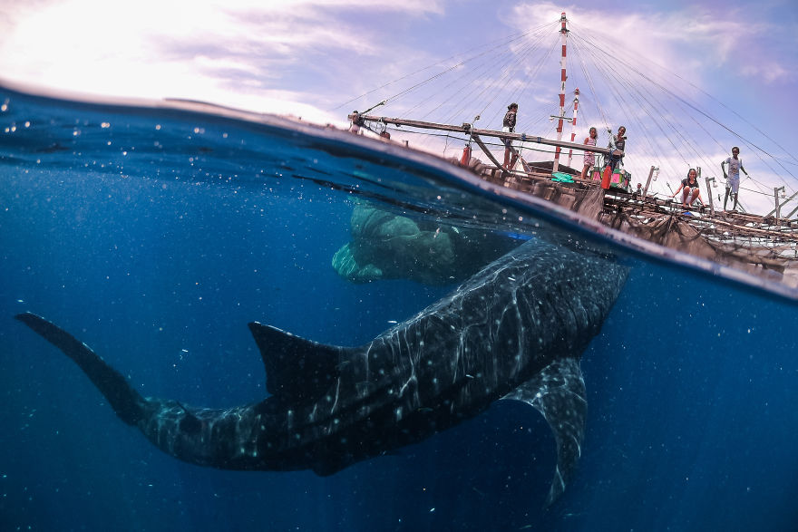 Travel: 'Whale Shark Encounter, Papua West, 2018' By Marco Zaffignani, Italy