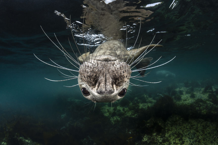 Natural World & Wildlife: 'Untitled' By Greg Lecoeur, France