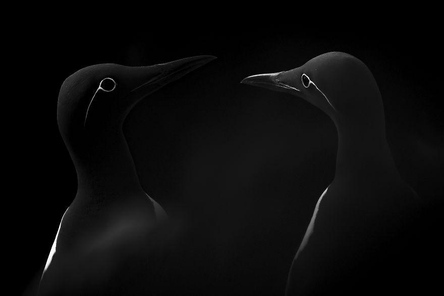 Natural World & Wildlife: 'Face To Face' By Manuel Enrique González Carmona, Spain