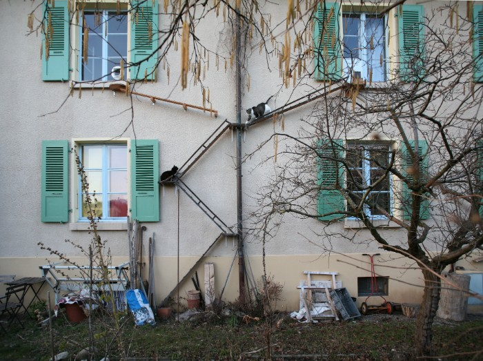Photographer Documents The Phenomenon Of Cat Ladders In Switzerland (22 Pics)