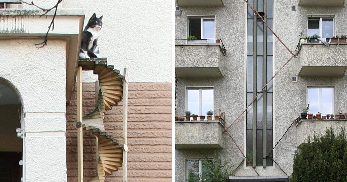 Picture of: Photographer Documents The Phenomenon Of Cat Ladders In Switzerland 22 Pics Bored Panda