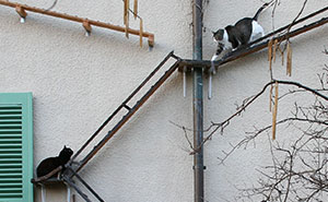 Photographer Documents The Phenomenon Of Cat Ladders In Switzerland (22 Pics)