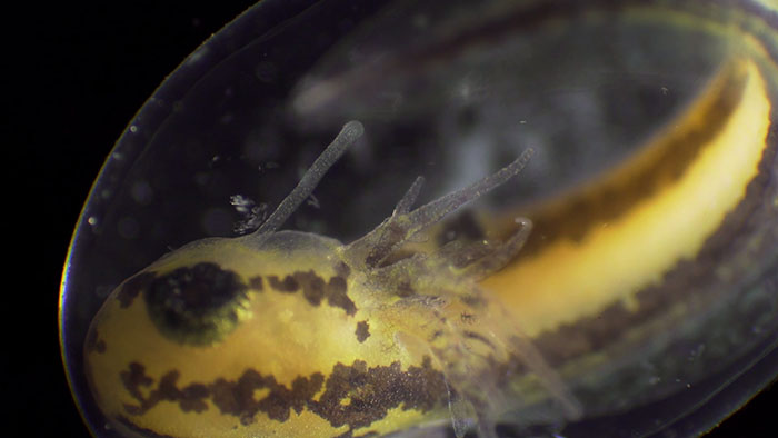 People Are Captivated By This Timelapse Of A Single Cell Becoming An Organism
