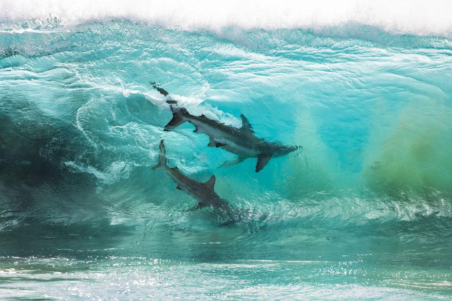 Sean Scott Shark Images