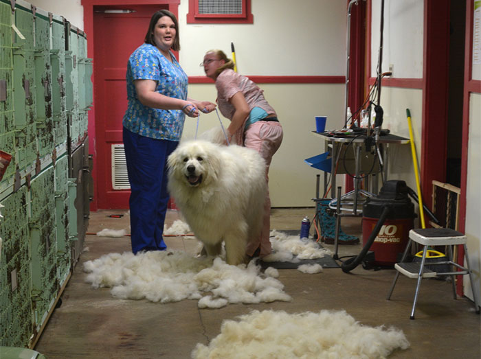 Esta peluquera de mascotas está harta de que le pregunten por qué sus servicios son más caros que los de un estilista y lo explica en un poster