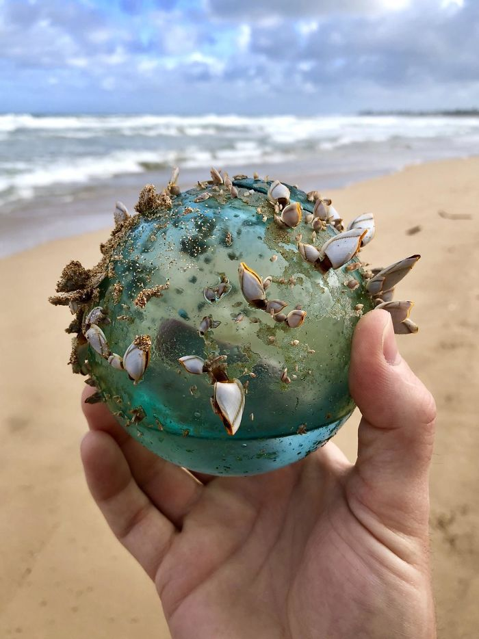 While Walking On The Beach In Hawaii My Wife And I Found This Glass Ball That Had Become The Home Of Small Marine Ecosystem