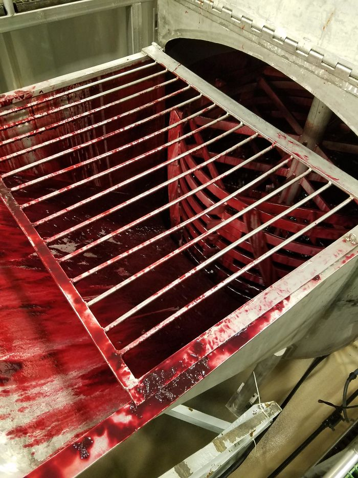 Processing Blood Oranges Looks Like A B Horror Movie Prop