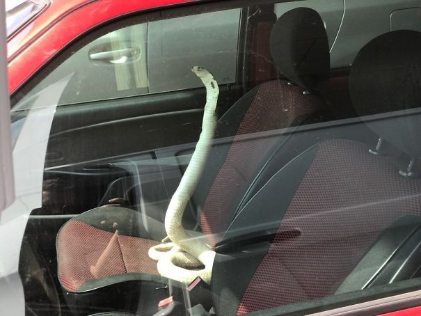 Parked Next To This Car Today. New Kind Of Car Alarm?