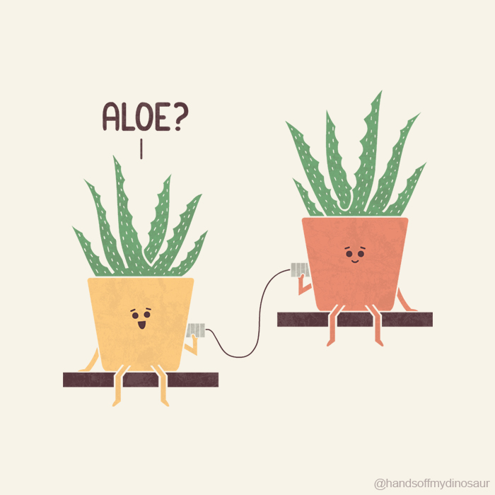 Aloe, Vera?