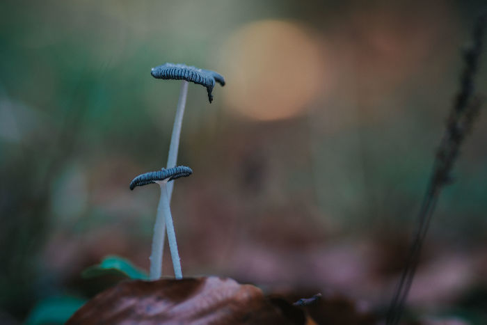 Best From Mushrooms Hunter Photography In 2018