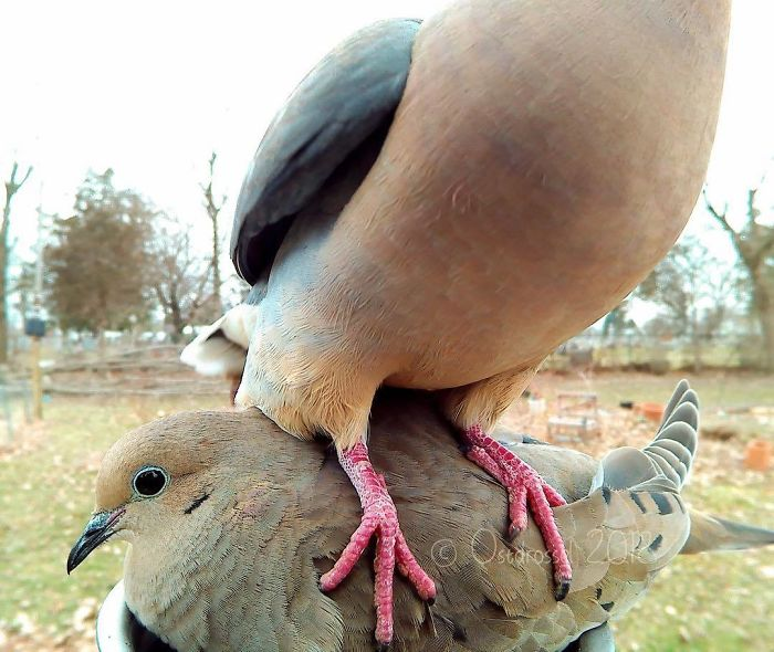 This Woman Set Up A Photo Booth For Birds In Her Yard, And The Results Are Extraordinary (30 Pics)