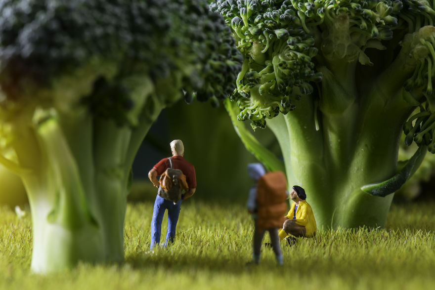 The Broccoli Forest