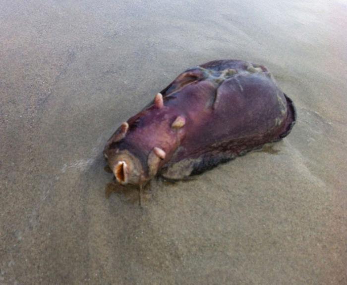 Found On Beach Near Nuclear Power Plant