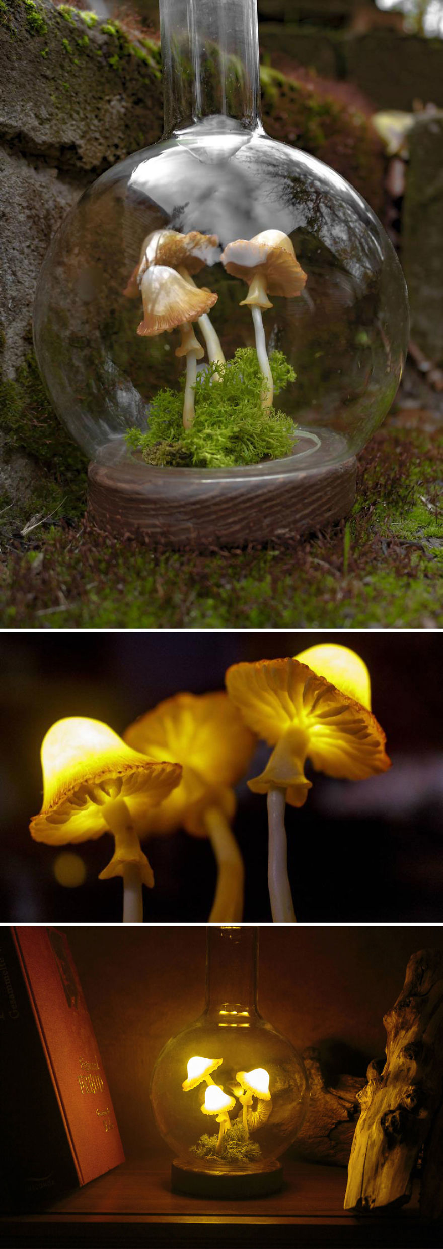 Three Mushrooms With Moss In A Glass Flask Night Light