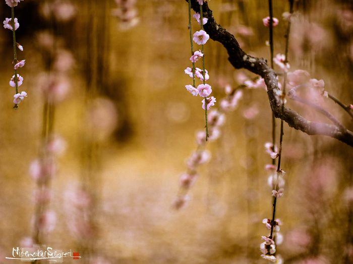 I Captured Spring In Japan