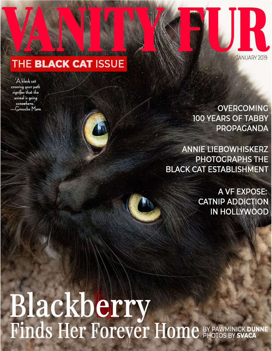 I Created Faux Magazine Covers To Boost Black Cat Adoption
