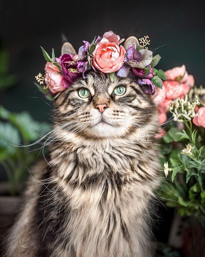 Ovaj umjetnik izrađuje cvjetne krune za životinje i evo kako to izgleda