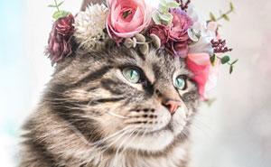 Esta artista crea coronas de flores para animales y les da un aspecto majestuoso