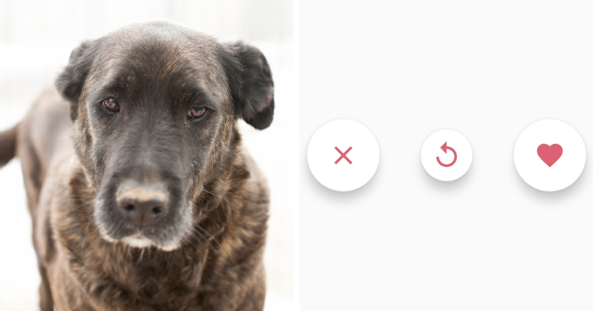 Getpet: Our Tinder-Inspired App That Connects Dogs With