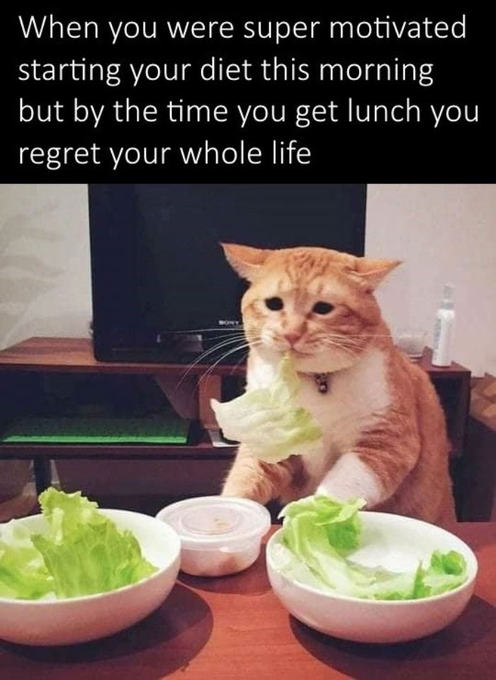 118 Weight Loss And Diet Memes That Will Burn Calories ...