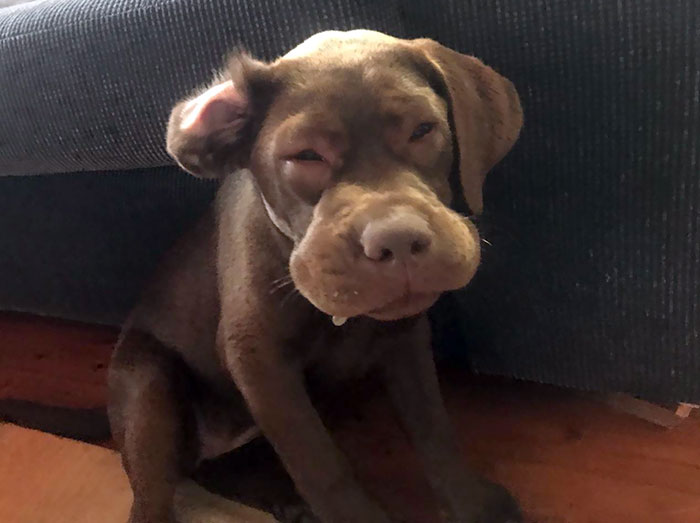 My Sister's Pup Ate A Bee