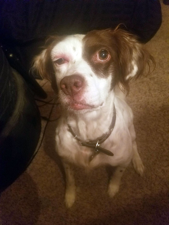 My Dog Got Stung On Her Head. Now She Has Forest Whitaker Eye