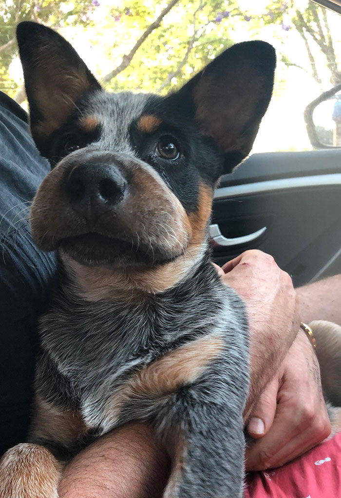 My Puppy Ate A Bee Today