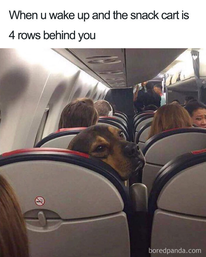 30 Funny Memes People That Travel Will Relate To | Bored Panda