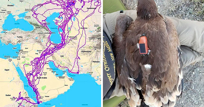 This Map Shows All Of The Places Eagles Visited In One Year, And People Are Guessing Why They Stayed Clear Of The Sea (Updated)