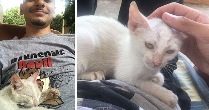 Guy Wakes Up From A Nap To A Stray Kitten Sleeping On His Stomach, Decides To Keep It