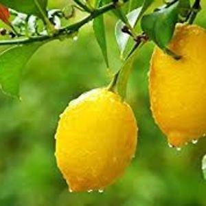 Lemon Garnished Potato