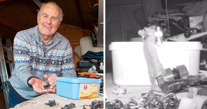"""I Thought I Was Going Mad:"" Pensioner Catches A Mouse That Kept Cleaning His Shed On A Trail Cam"