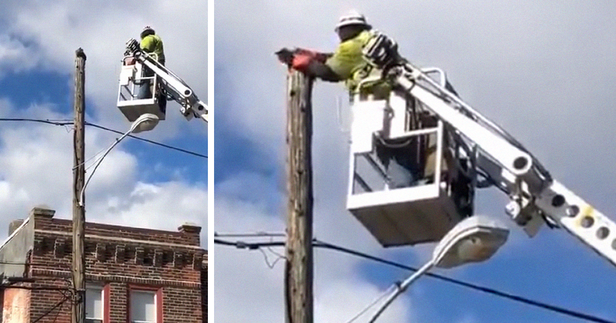 Verizon Worker Gets Suspended For Using Company Equipment To Rescue A Cat From A Telephone Pole