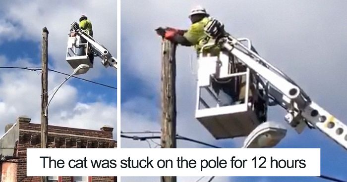 Image result for Man suspended after rescuing a cat stuck on top of a utility pole