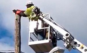 Verizon expulsa temporalmente a un trabajador que usó su equipo de trabajo para rescatar a un gato