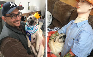 15-year-old Dog With Separation Anxiety Learns To Cuddle With A Dummy Dressed In Owner's Clothes