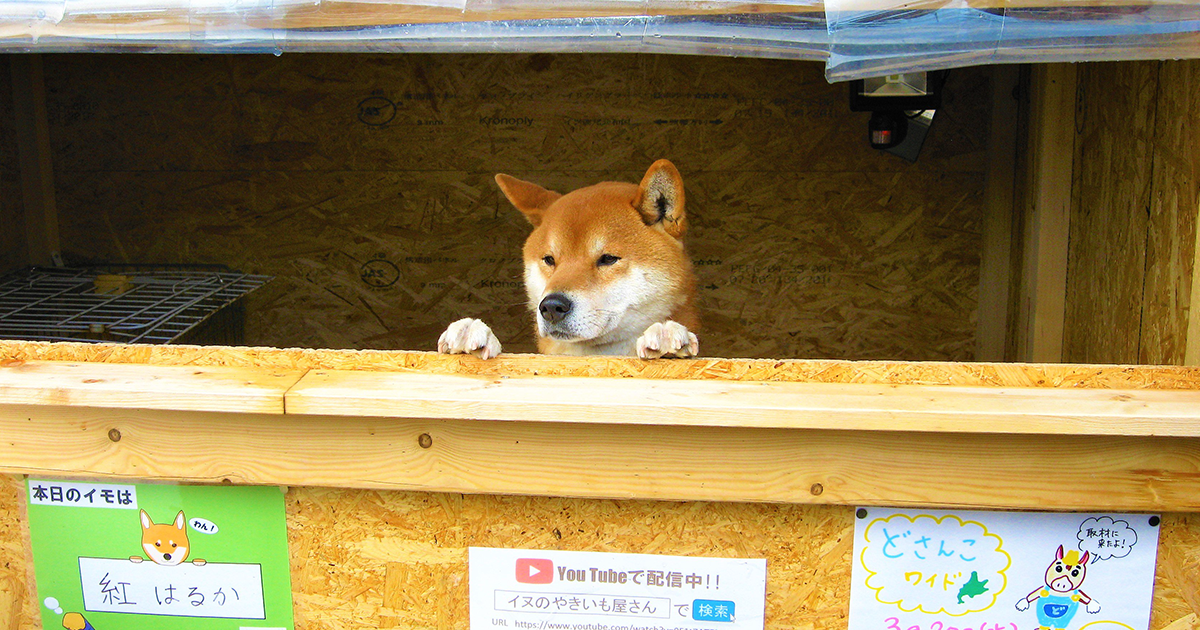 This Roast Potato Store In Japan Is Managed By A Shiba | Bored Panda