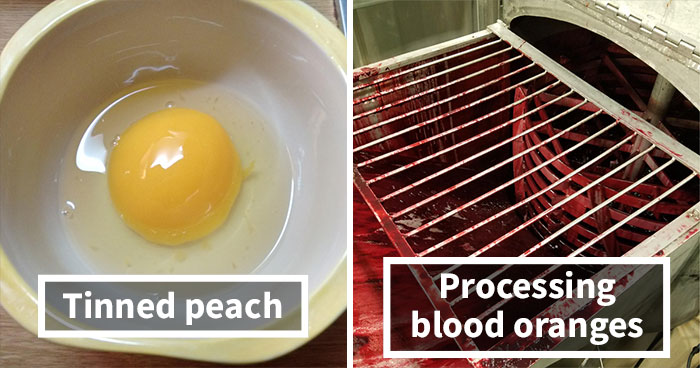 44 Things That Look Like Other Things