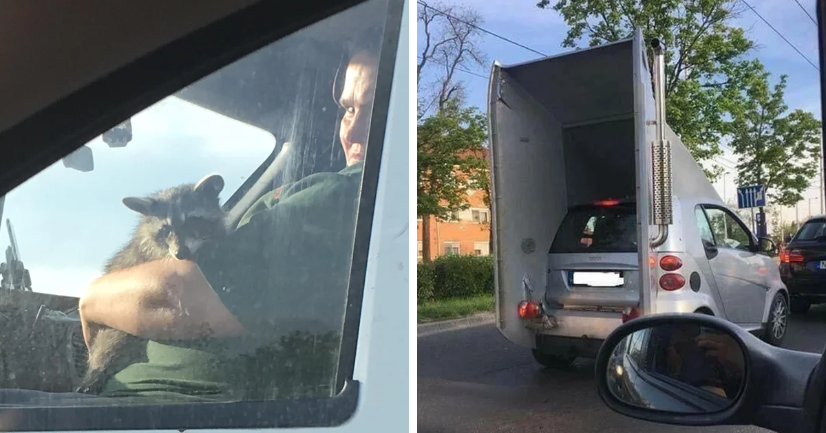 64 Times People Couldn't Believe Their Eyes On The Road