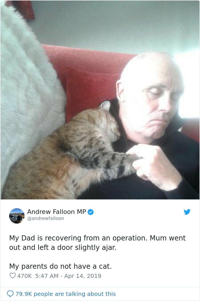 Man Recovering From Surgery Wakes Up To A Stranger Cat Cuddling Him
