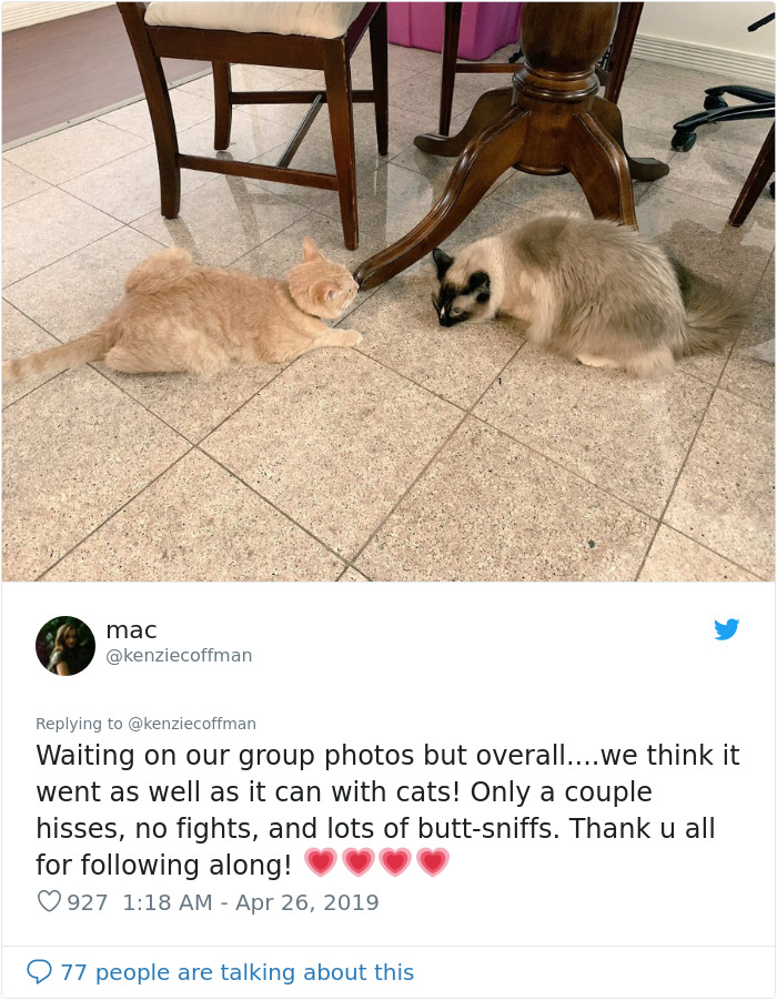 These Two Cats Fell In Love After Seeing Each Other Through Windows, Their Owners Make Sure They Get A Date