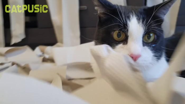 Se vuelve viral un vídeo de un gato volviéndose loco en una habitación llena de papel higiénico
